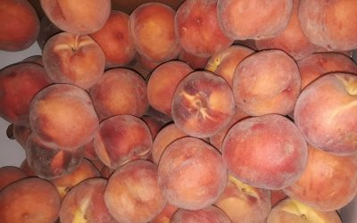 Peach of a Morning: Transforming Volunteers into Strategic Messengers